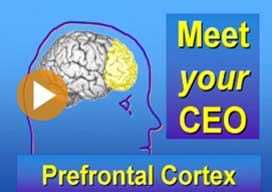Video: TM enhances brain's executive functioning